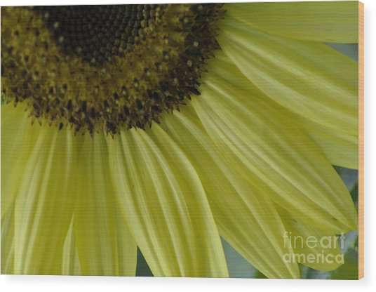 Rays Of Sunshine Wood Print by Tamera James