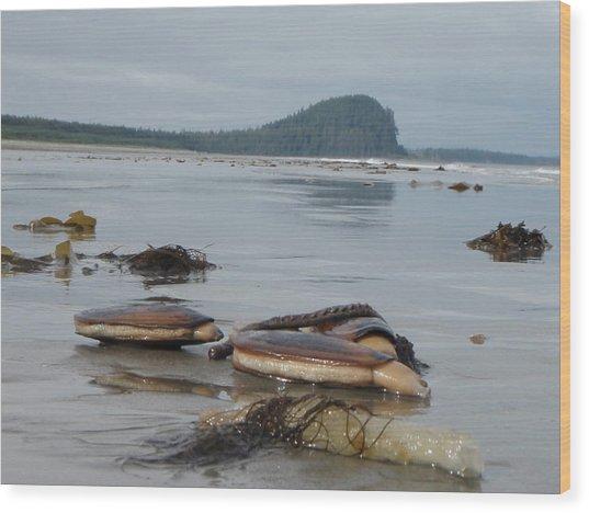 Razor Clams Wood Print by Garry Otto