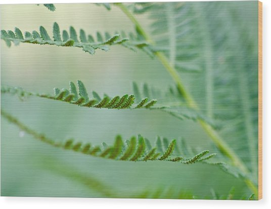 Reaching Ferns Wood Print by Margaret Pitcher