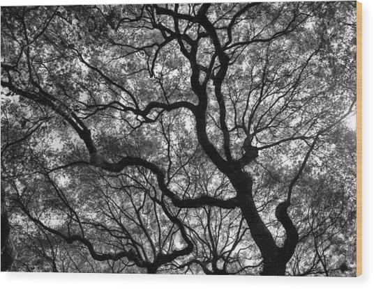 Reaching To The Heavens Wood Print