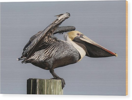 Ready For Take Off Wood Print by Paulette Thomas