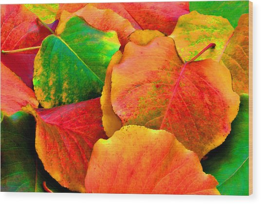 Really Colorful Fall Leaves Wood Print