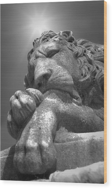 Recoleta Lion Wood Print