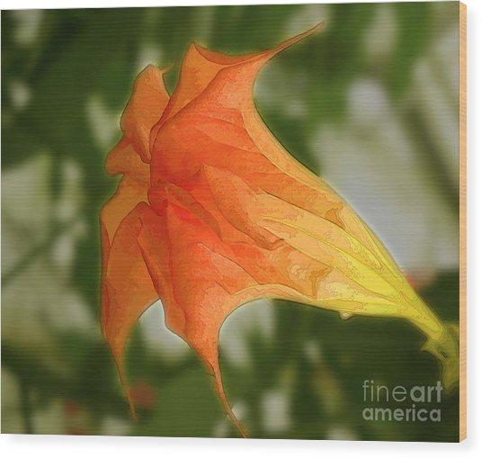 Red Angels Trumpet Flower Wood Print
