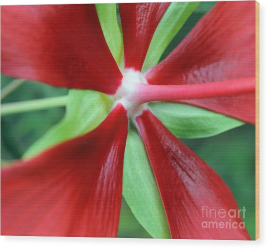 Red Awakening Wood Print
