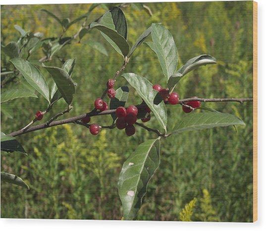 Red Berries Wood Print by Katherine Woods