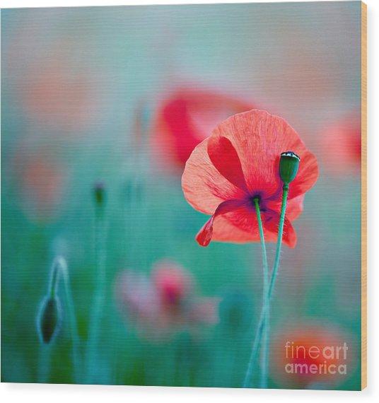 Red Corn Poppy Flowers 04 Wood Print