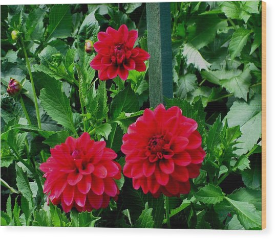 Red Flowers Wood Print by Kathy Long
