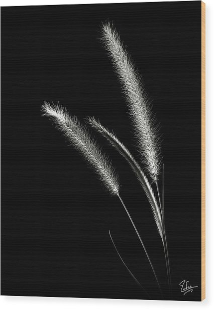 Red Fountain Grass In Black And White Wood Print
