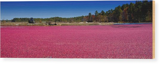 Red Harvest Wood Print