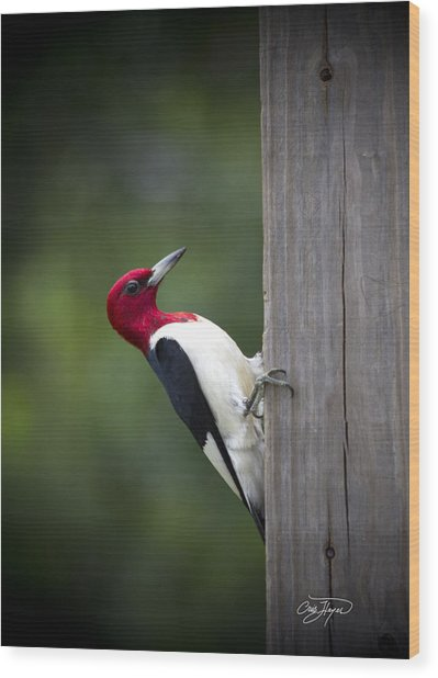 Red Headed Woodpecker Hdr - Artist Cris Hayes Wood Print