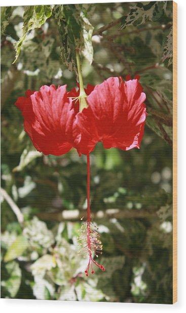 Red Hibiscus Wood Print by Natalija Wortman