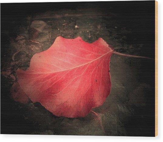 Red Leaf  Wood Print by Beth Akerman