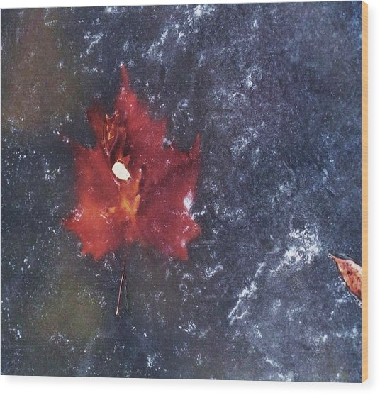 Red Leaf In Ice Wood Print by Todd Sherlock