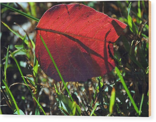 Red Leaf On Green Wood Print
