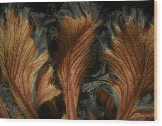 Red Lettuce Wood Print