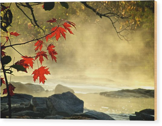 Red Maple Leafs In Fog Wood Print
