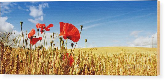 Red Poppies In Golden Wheat Field Wood Print by Catherine MacBride
