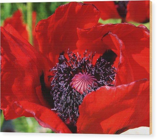 Red Poppy Close Up Wood Print