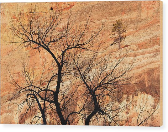 Red Rocks And Trees Wood Print by Adam Pender