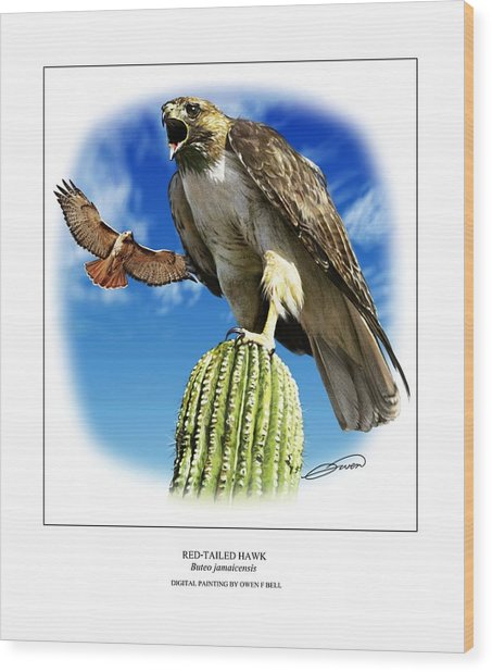 Red Tailed Hawk Wood Print by Owen Bell