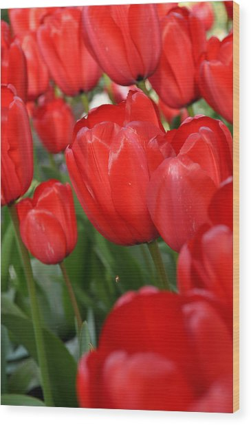 Red Tulips Close Up Wood Print