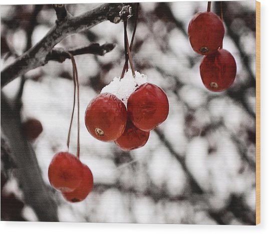 Red Winter Berries Wood Print