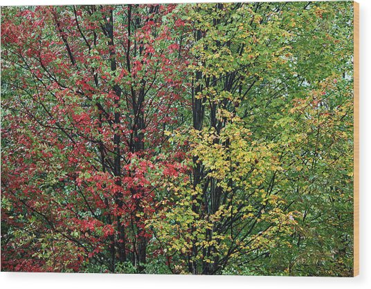Red Yellow And Green Leaves Wood Print