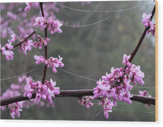 Redbud With Webs And Dew Wood Print