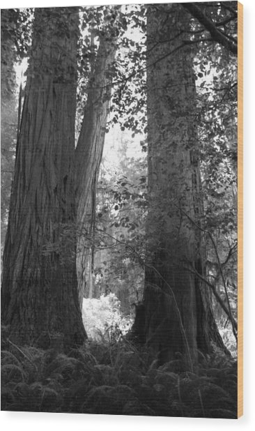 Redwood Pair Wood Print