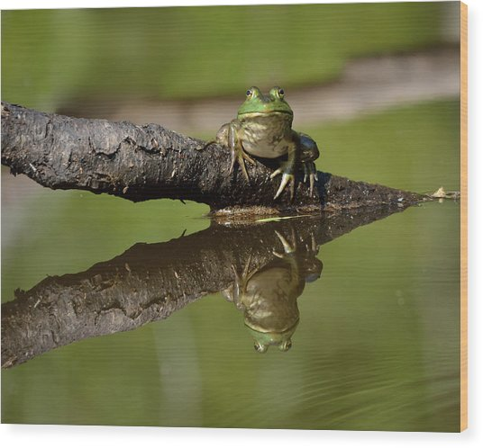 Reflecktafrog Wood Print