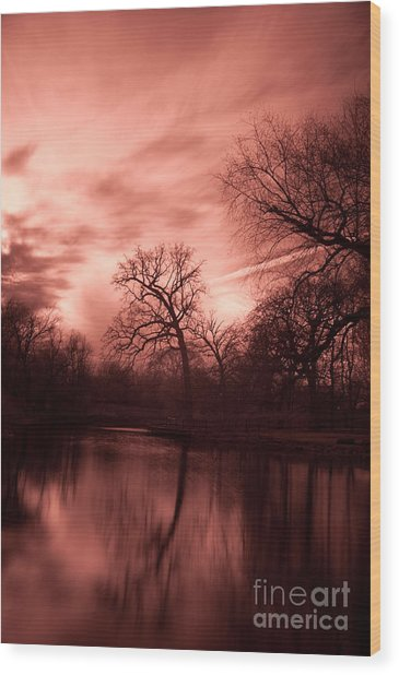 Reflected Wood Print by Rossi Love