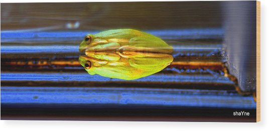 Reflecting Frog Wood Print