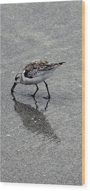 Reflection Of A Lonely Bird Wood Print