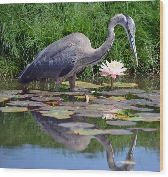 Reflections At Lilly Pond Wood Print