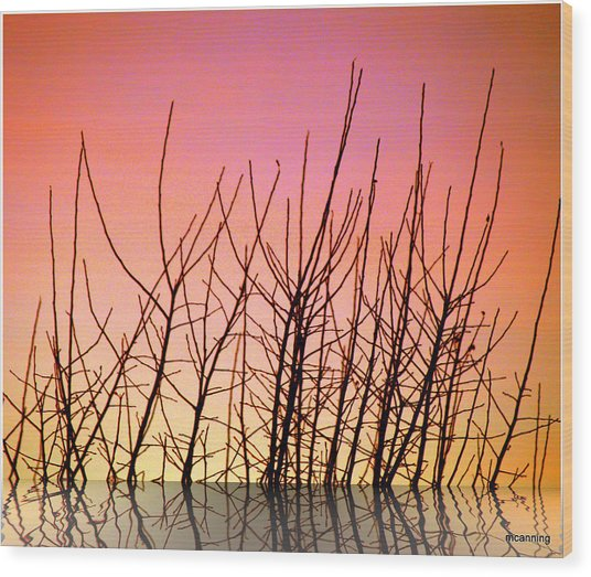 Reflects In Nature Wood Print