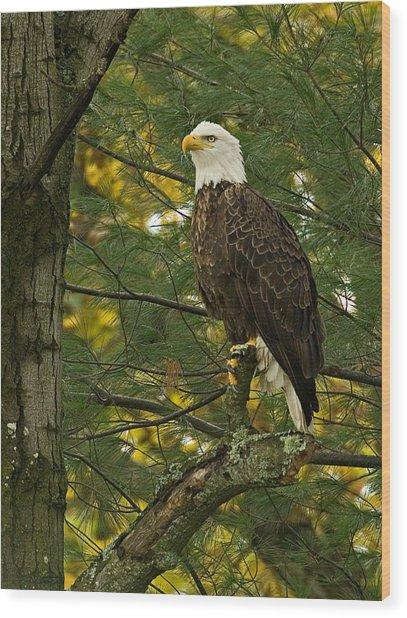 Regal Wood Print