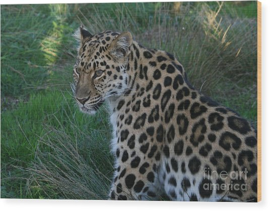 Relaxing Leopard Wood Print by Carol Wright