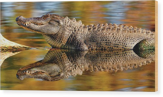 Relection Of An Alligator Wood Print