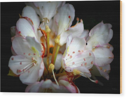 Rhododendron Explosion Wood Print