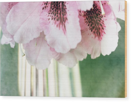 Rhododendron Refraction Wood Print by Margaret Hormann Bfa