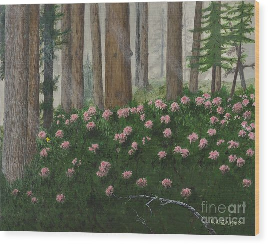 Rhododendrons And Redwoods Wood Print