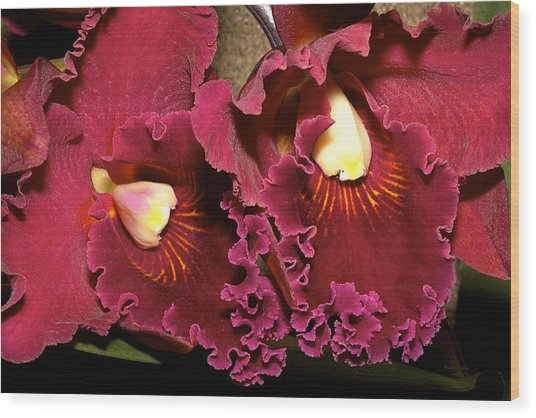 Rich Burgundy Orchids Wood Print