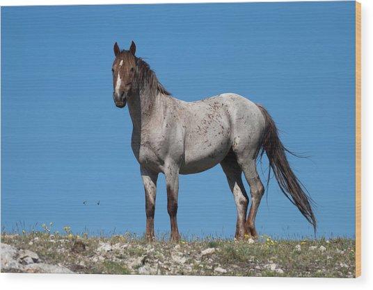 Ridgetop Mustang Wood Print