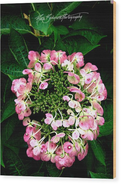 Ring Of Pink Wood Print by Ruth Bodycott