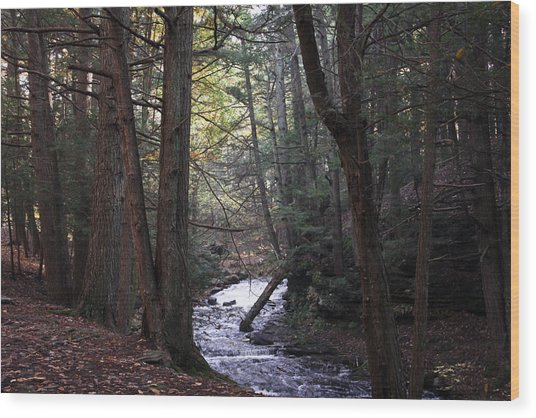 River Below Grayville Falls 1 Wood Print