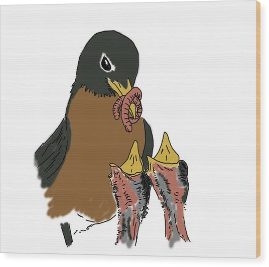 Wood Print featuring the drawing Robin Feeding Chicks by Daniel Reed