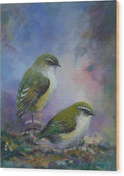 Rock Wren New Zealand Wood Print by Peter Jean Caley