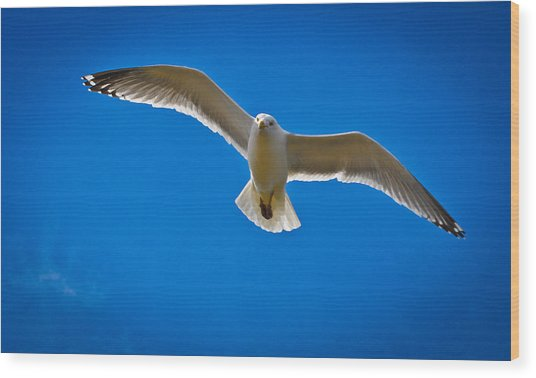 Rockport Gull Wood Print by Erica McLellan