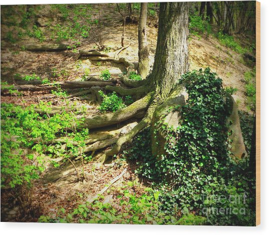 Roots Wood Print by Maria Scarfone